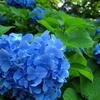 綺麗な青色♪