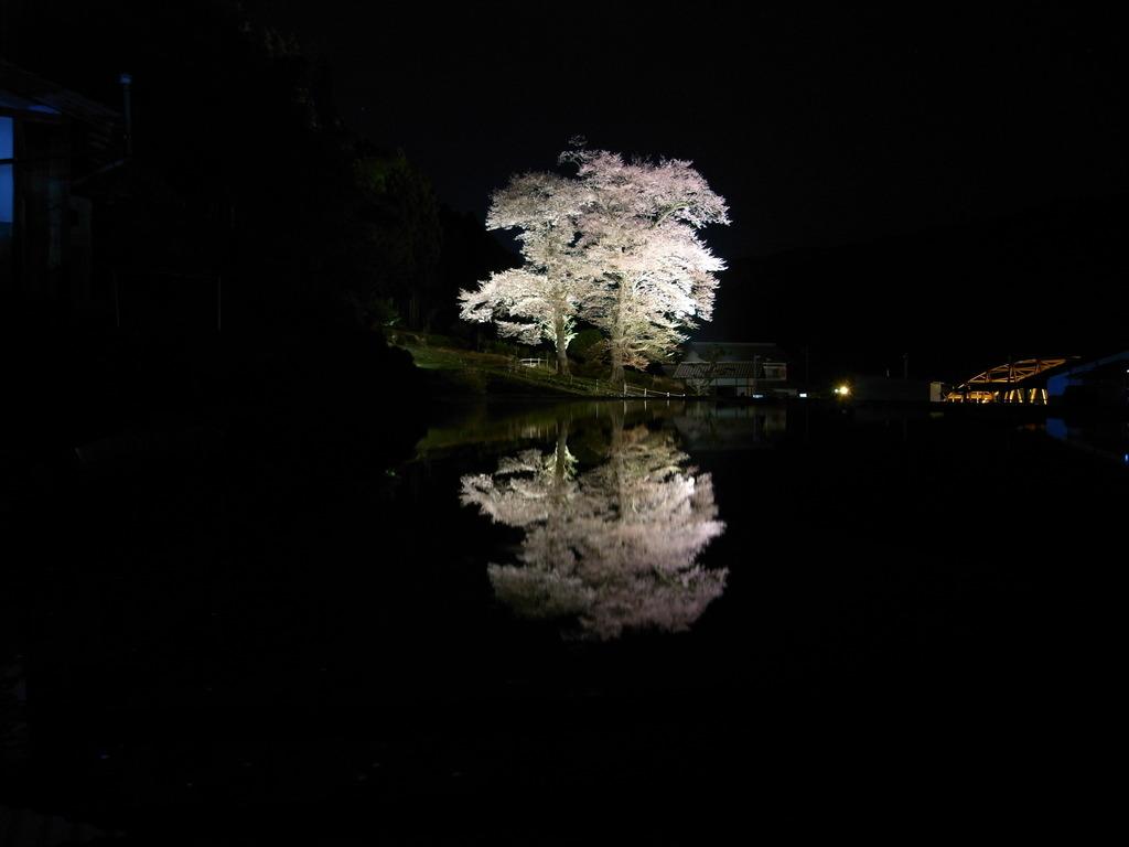 苗代桜 023