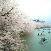 満開な弘前公園 その1