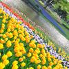 昭和記念公園 その2