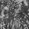 青森旅行 種差海岸 松林