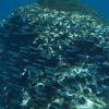 小魚の群れ