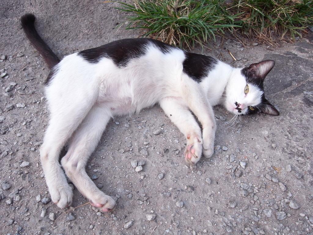 寝そべるネコ2