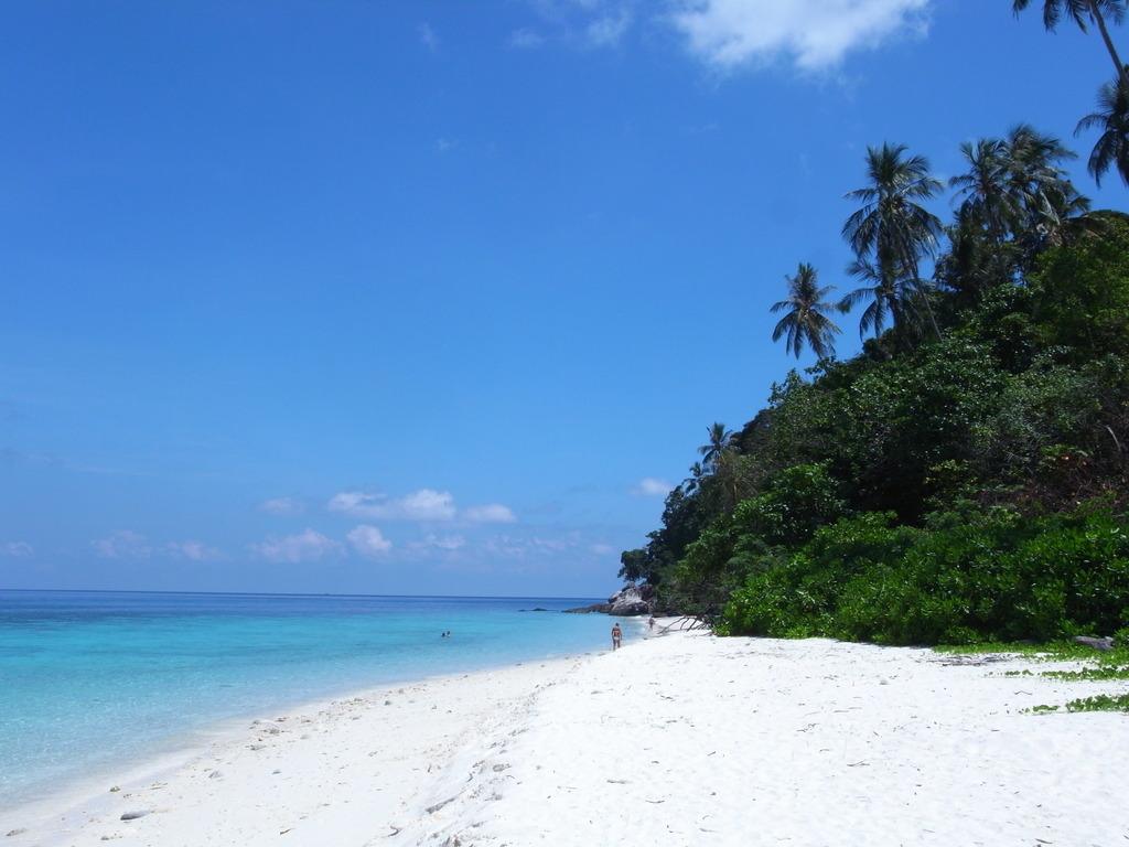 海とビーチとジャングルと