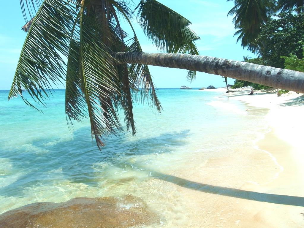 海に向かって伸びる椰子の木