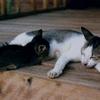 南の島の猫