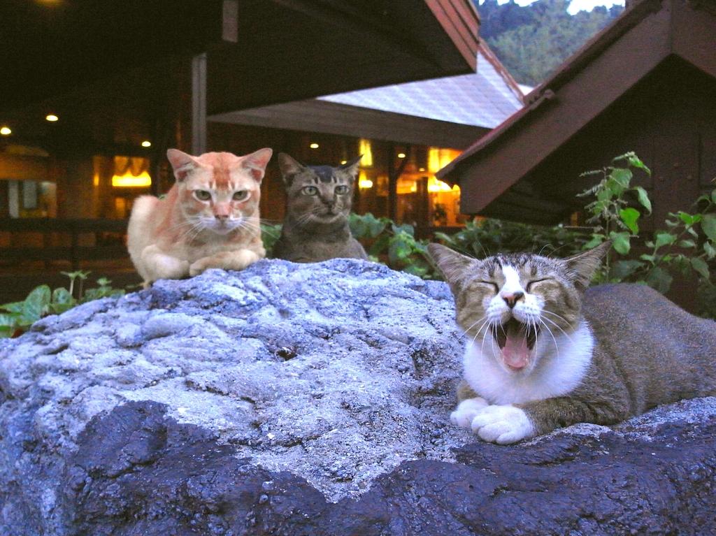 ネコの集会にお邪魔しました