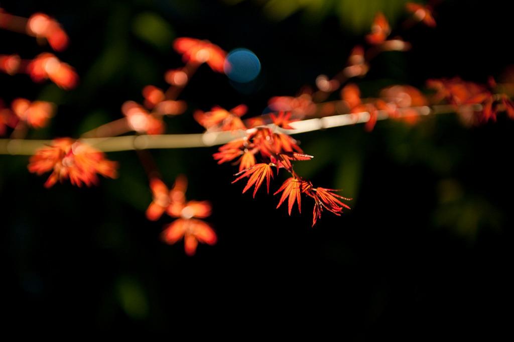 照らされる葉