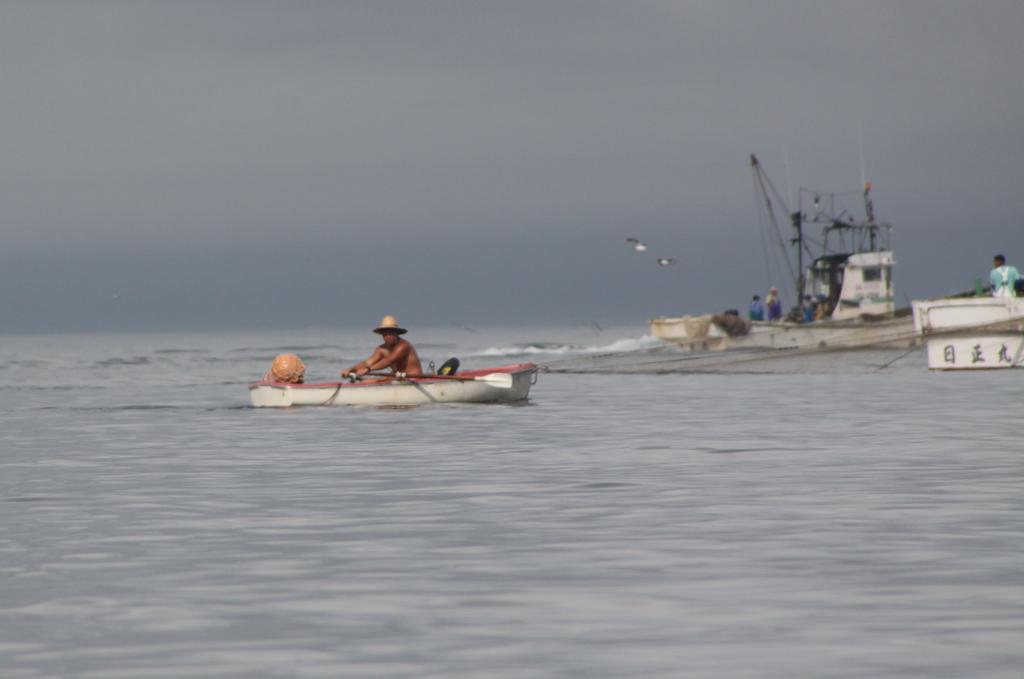 しらす漁の朝