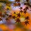 晩秋のシルエット