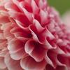 花の表情1