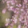 春のそよ風