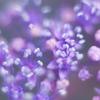 Little Violet