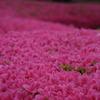 雨の花回廊