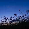 晩秋の青いシルエット