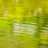 緑だけの池の昼下がり