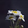 花の気持ち