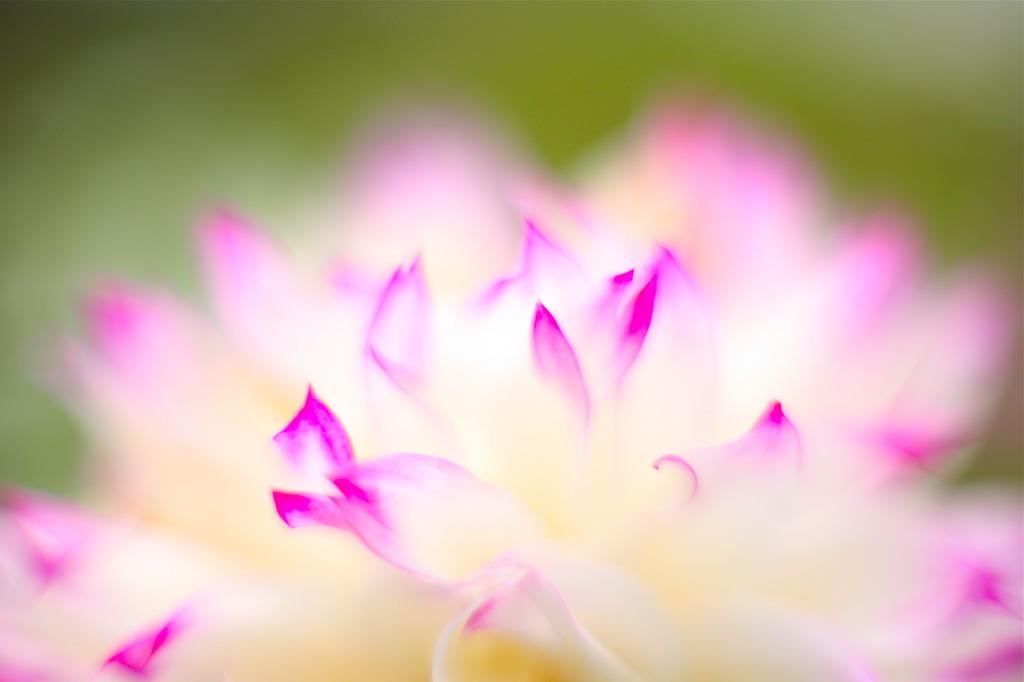 花びらの丘