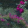 花の印象 Ⅴ