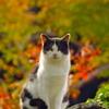 見張り番猫