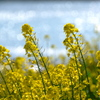 春の光と風