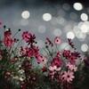 秋の光と花の思い