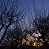 梅の香と黄昏と