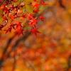 Borderless Autumn