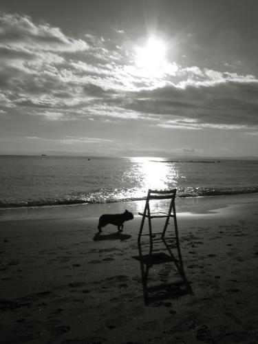 chair & dog