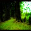 翠の一本道