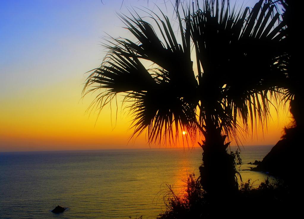 フェニックスと夕陽