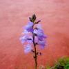 フラワーフェスタ宮崎  野の花