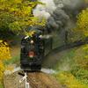 秋を走るSLニセコ
