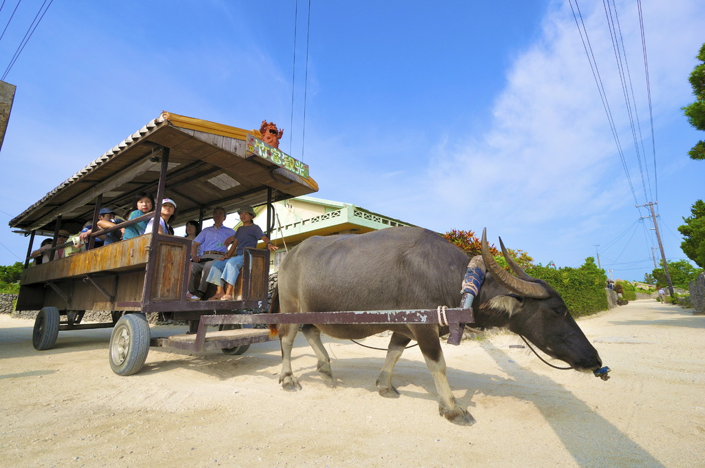 Take the oxcart
