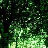 Shining Green