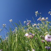 花達の日光浴