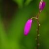 初夏 紫2