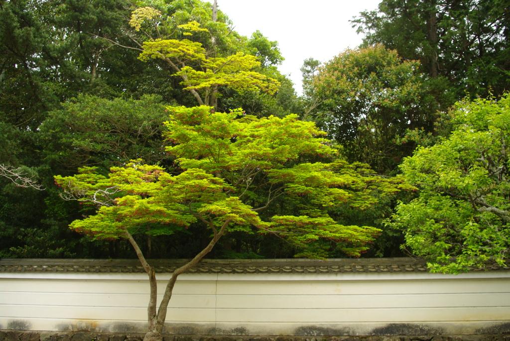 秋篠寺 緑 白壁