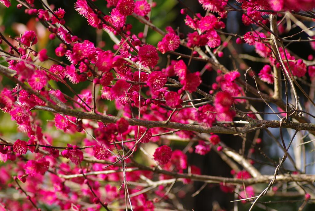 春。春。春。