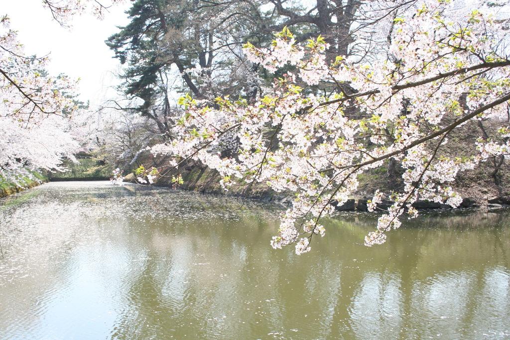 弘前桜公園