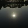 冷たい水の中の小さな太陽