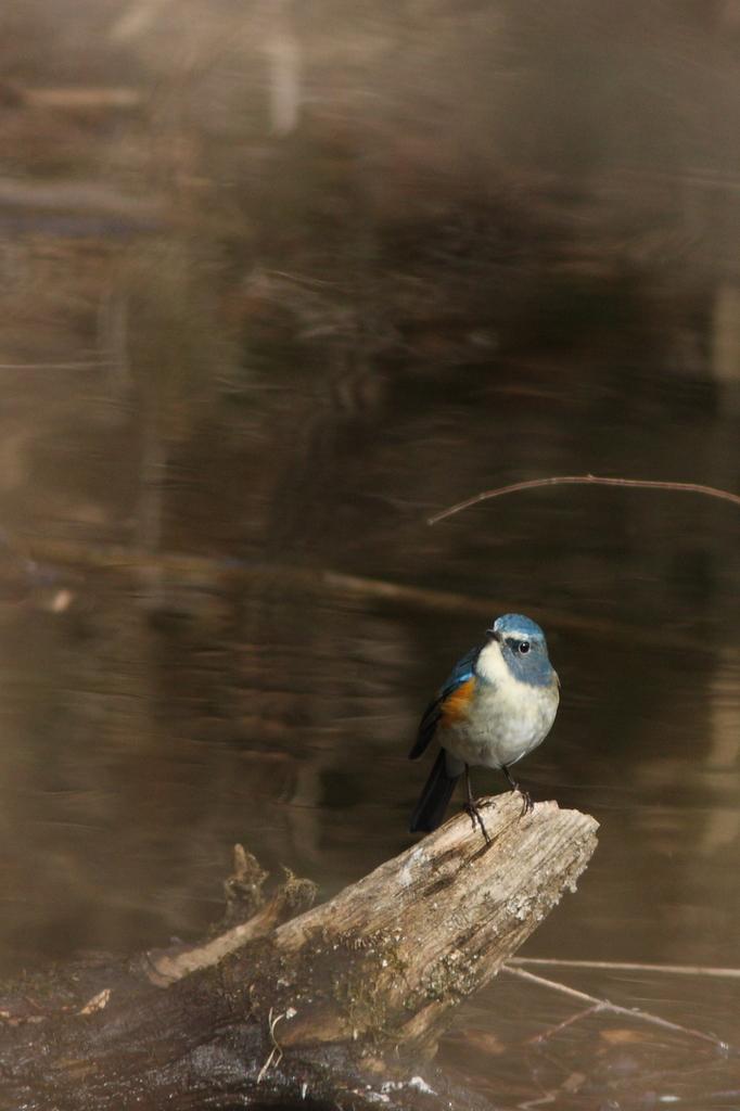 青い鳥みつけた