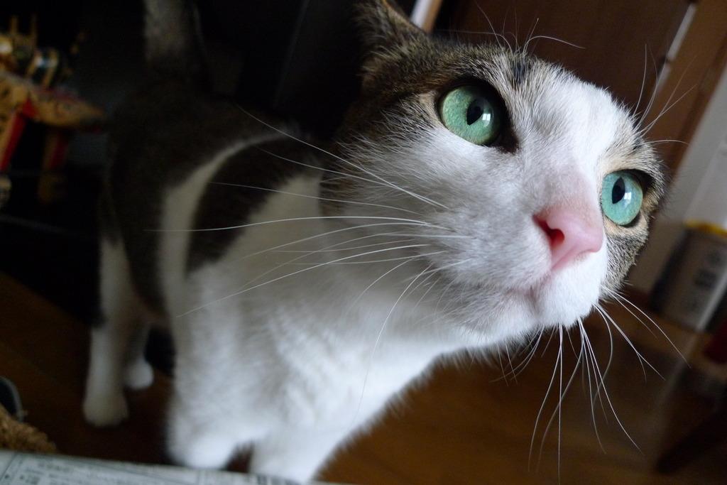 エメラルドの瞳