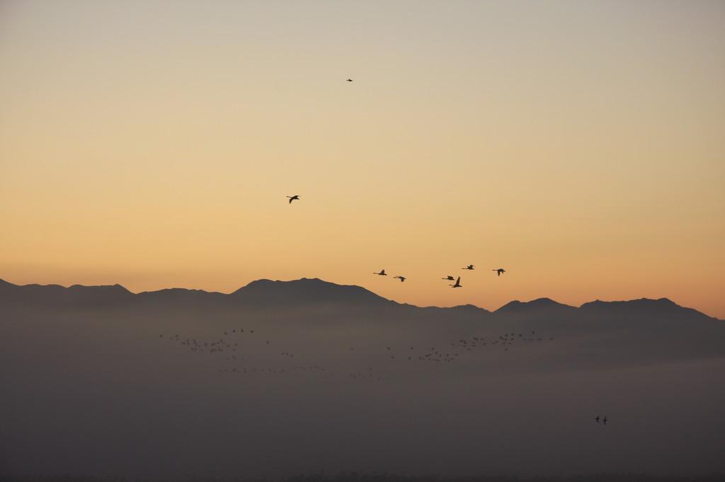 飛ぶ鳥と会話できるか写真人