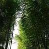 竹林めぐり
