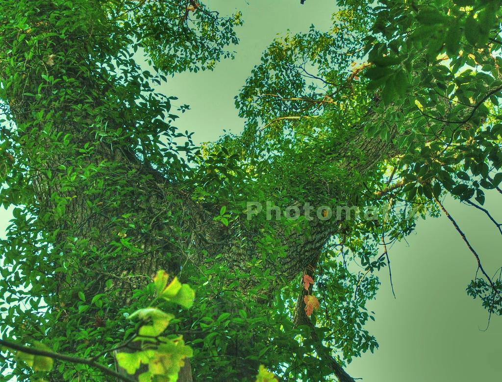 樹木001d_r_