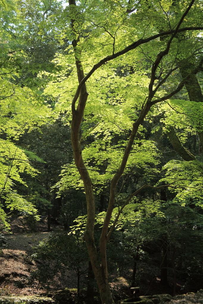 水谷神社への参道