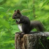 森の小さな番人