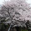 桜とふたりα