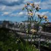 ハルシオンと春の空